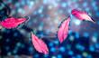 Leinwandbild Motiv Pink flower petals float on the surface of water.