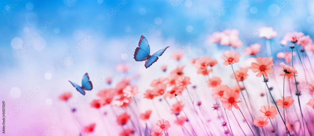 Fototapeta Beautiful flower field and flying butterflies on blue sky background. Colorful toning of amazing nature landscape with wild plants and insects.