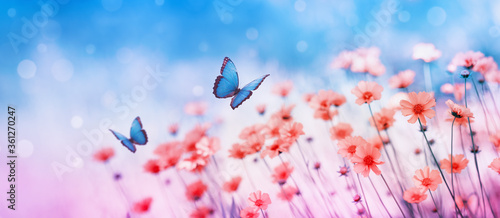 Fototapeta Beautiful flower field and flying butterflies on blue sky background. Colorful toning of amazing nature landscape with wild plants and insects. obraz