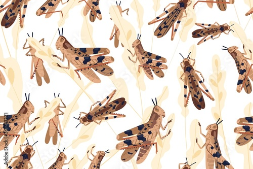 Fotografía Swarm of locusts attacking rice crop seamless pattern