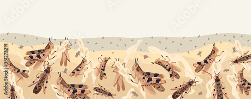 Fotografía Colorful locusts attacking plants field horizontal background