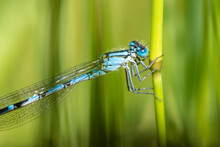 Blue Dragonfly On Green Leaf