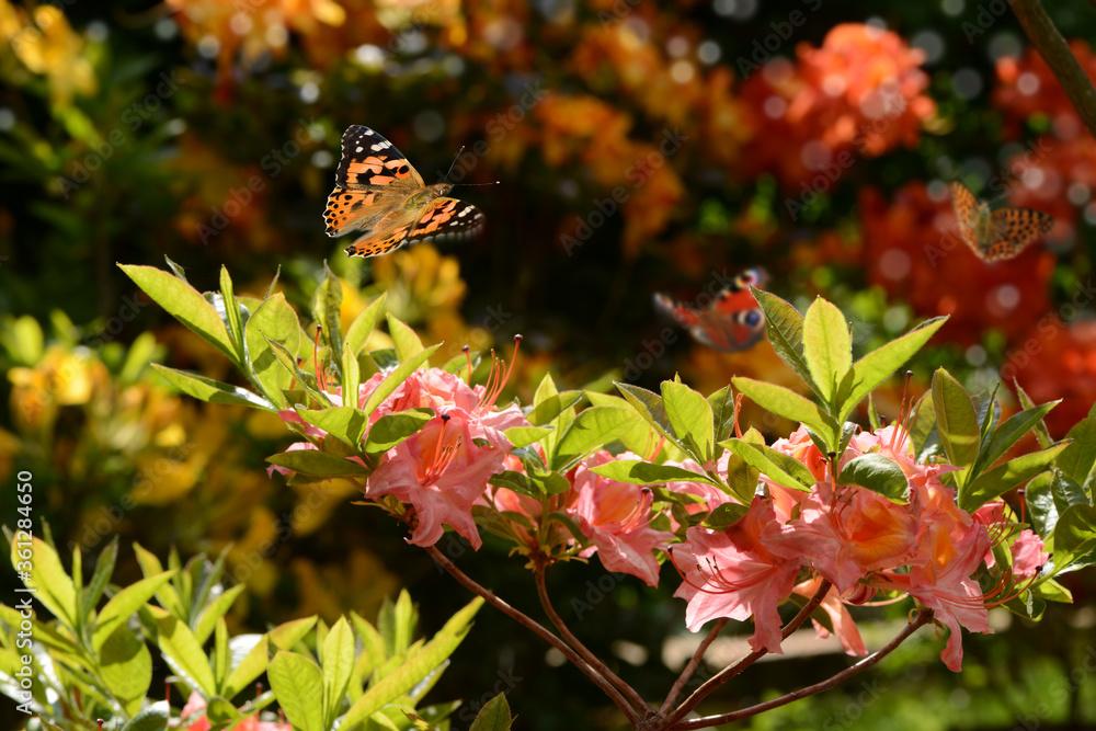 Schmetterling 672