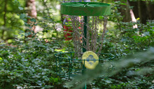 Green Disc Golf Disc In The Chain Of Basket
