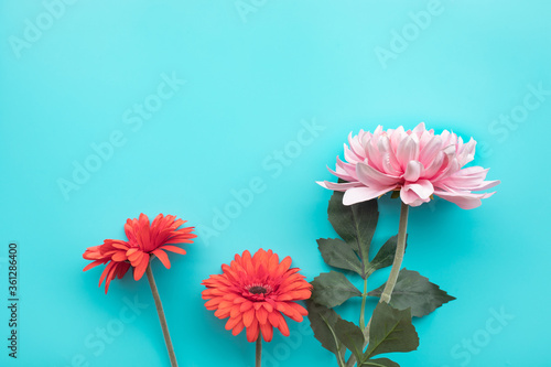 Fotografía Flower on blue background with copy space