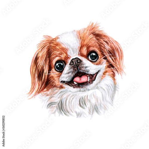 Fotografering Watercolor illustration of a funny dog