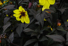 Yellow And Black Flower With Bee
