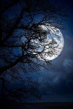 The Silhouette Of A Spooky Bare Branch Halloween Tree Against A Winter Blue Night Sky With A Glowing Full Moon And Clouds