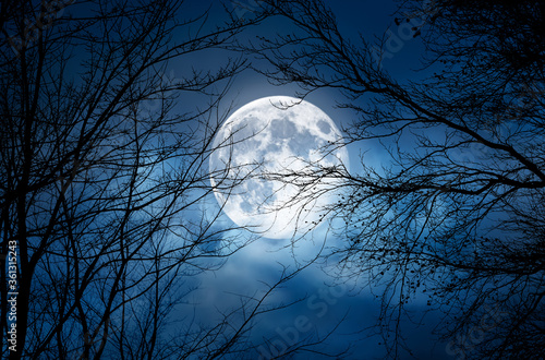 Obraz The silhouette of a spooky bare branch halloween tree against a winter blue night sky with a glowing full moon and clouds - fototapety do salonu