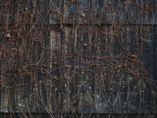Autumn Ivy Wooden Oldhouse Wal...