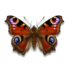 The Peacock Butterfly Illustration Named Aglais Io  With Explosive Deep Carmine Red And Peacock Eyes In Black Yellow And Blue From Europe Isolated On White Background