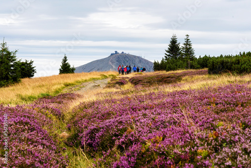 Fototapeta KARKONOSZE, POLAND - AUG 15, 2019: View of hiking trails and Karkonosze (Krkonose) mountains national park at the Poland and Czech Republic border. Scenic summer landscape with beautiful views. obraz