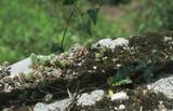 Fototapeta Kamienie - Kamień obrośnięty mchem