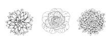 Vector Flowers Of Rose, Chrysanthemum, Dahlia. Hand-drawn Black And White Flower Heads. EPS 10