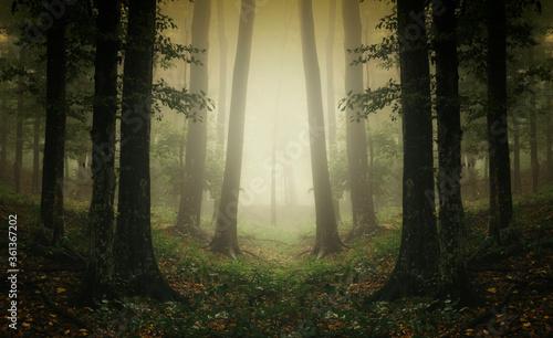 surreal woods landscape, symmetrical forest