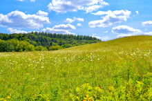 A Rolling Field Of Pollinator-friendly Wildflowers In Rural Vermont.  Woodstock, Vt.