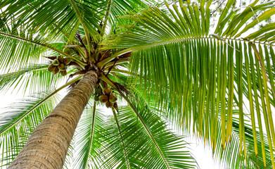 Panel Szklany Podświetlane Drzewa beautiful palm tree