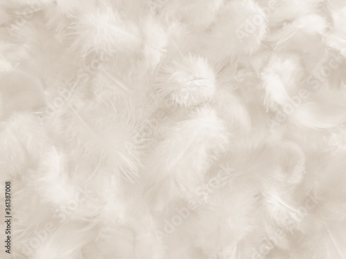 Beautiful abstract gray and white feathers on white background, soft brown feath Canvas Print