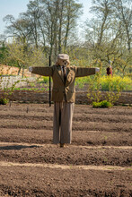 A Friendly Scarecrow In A Tilled English Field In The Sunshine That Does Not Appear Scary