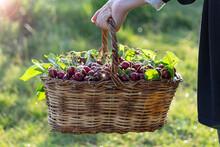 Organic, Drug-free And Natural...