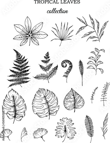 Fototapety, obrazy: Linear tropical leaves. Monstera, eucalyptus, fern, ginkgo, banana leaf, palm leaf, etc. Hand drawn illustration. perfect for invitation cards, summer decor, greeting cards, posters, scrapbooking
