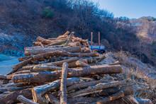 Large Pile Of Cut Logs.