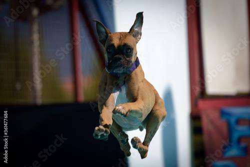 Valokuvatapetti Dock Dogs Southwest