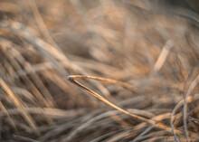 Close Up Of Grass - Bokeh