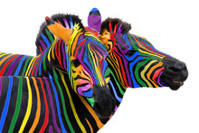 Two Colorful Zebra Painted In ...