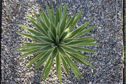 spiky leaved plant Fototapet