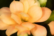 Leinwandbild Motiv Little orange flower on the nature.