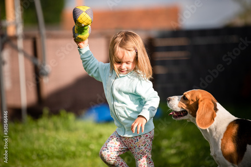 Fototapeta Young 2-3 years old caucasian baby girl playing with beagle dog in garden. obraz