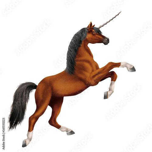 Photo cheval, licorne, animal, isolé, étalon, blanc, brun, noir, mammifère, ferme, cou