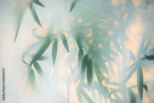 Fototapety zielone  green-bamboo-in-the-fog-with-stems-and-leaves-behind-frosted-glass