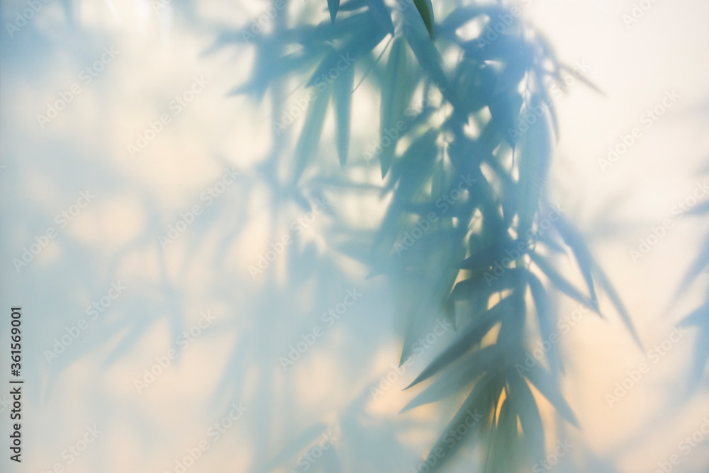Green bamboo in the fog with stems and leaves behind frosted glass