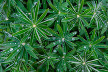 Close Up Of Green Leaves In De...