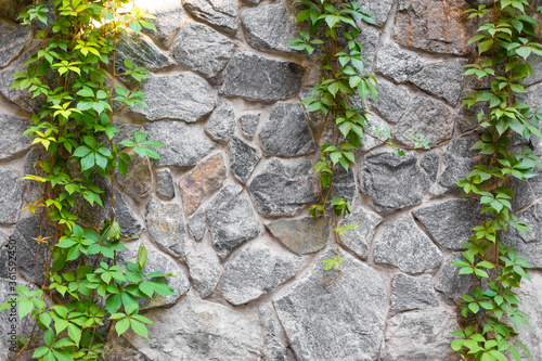 Obraz na plátně Stone wall in the garden entwined with a green plant.