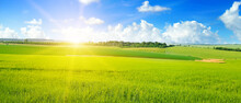 Green Field, Sun And Sun On Blue Sky. Wide Photo.