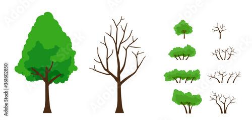 Fotografía 緑葉の木と葉の落ちた木 セット