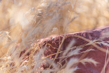 Red Rocks And Dry Grass
