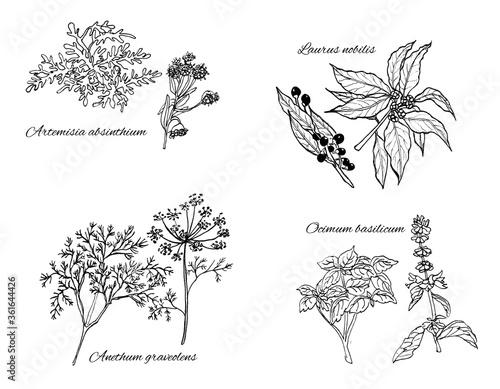 Set di illustrazioni botaniche vintage, erbe aromatiche isolate su sfondo bianco Canvas Print