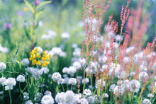 Multicoloured Wildflowers Bloo...