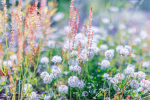 Multicoloured Wildflowers Blooming In The Meadow