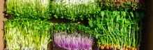 Microgreens Mixed Organic Spro...
