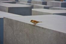 Berlin Holocaust Memorial Spar...