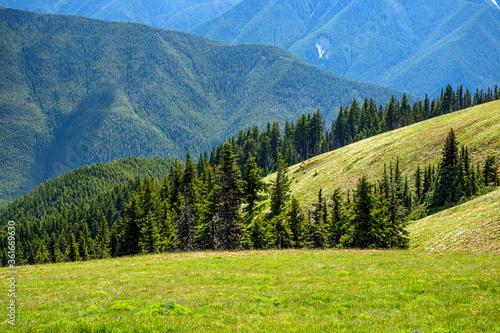 Obraz na plátně Open grassy hillside surrounded by forested mountains