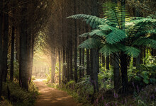 Forest With Ferns, New Zealand