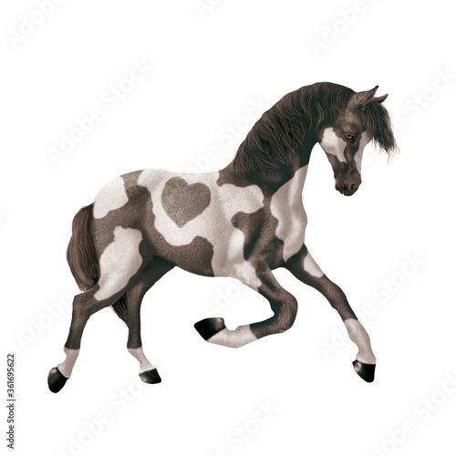 cheval, isolé, noir et blanc, coeur,  animal, étalon, blanc, mammifère, brun, fe Canvas Print