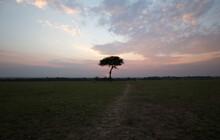 Sunset In Africa. Kenya.