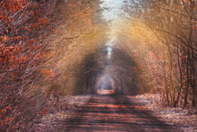 Autumnal Tunnel Of Trees And B...
